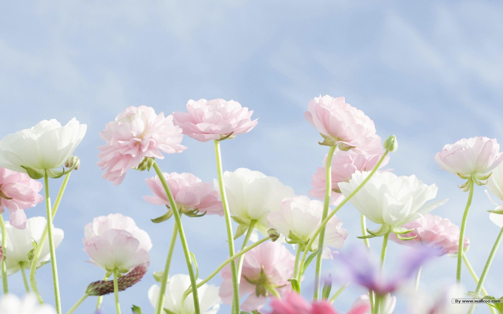 Cvetlični vrt // Aromatični sprej // 100ml